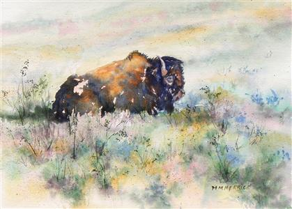 Buffalo in Custer